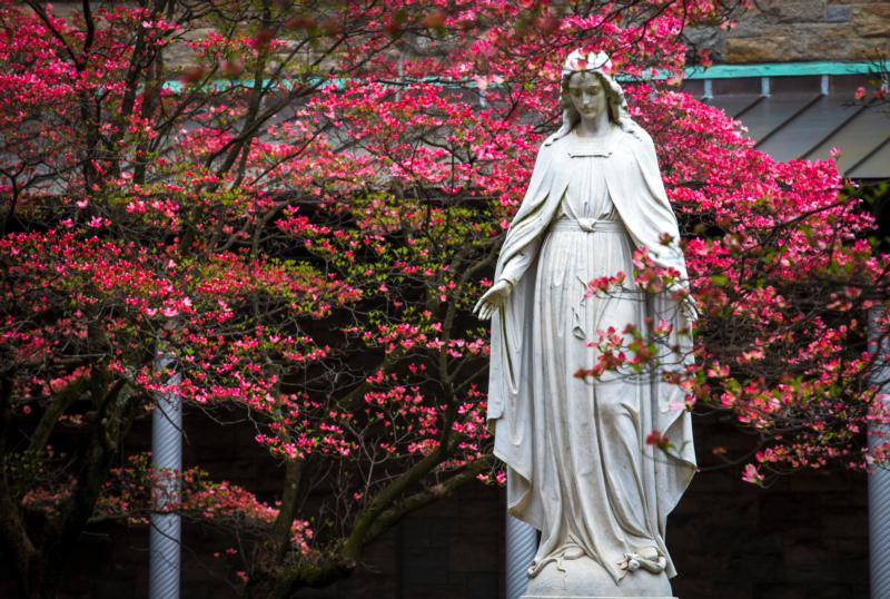 A statue of Mary is visible among the vivid spring buddings May 1, 2019, at St. Joseph's Seminary in Yonkers, N.Y.