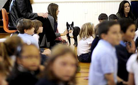 A dog stands in the crowded gymnasium.
