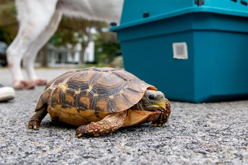 James and Elaine Bennett brought their turtle, Torre, to be blessed.