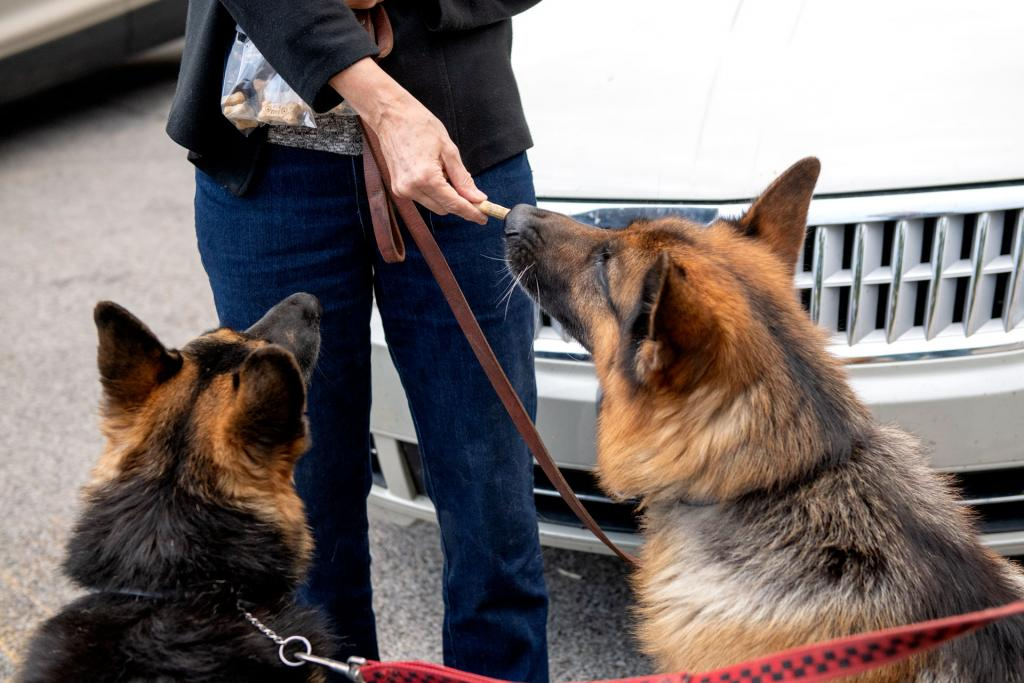 Rose Grammer gives her dogs Adda and Drago a treat following the service.