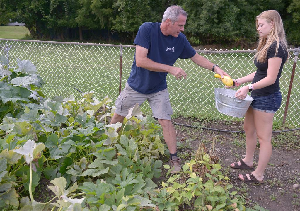 Dan Lynch picks squash Aug. 23 as his daughter, Maddy, holds a basket at the Giving Garden at St. Patrick Church in Victor. Produce from the garden is donated to the Victor/Farmington Food Cupboard. (Courier Photo by John Haeger)