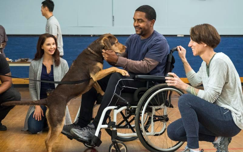 "Ashley Judd, Shelby the dog, Rolando Boyce and Annie Nelson star in a scene from the movie ""A Dog's Way Home.""  (CNS photo by Sony Pictures)"