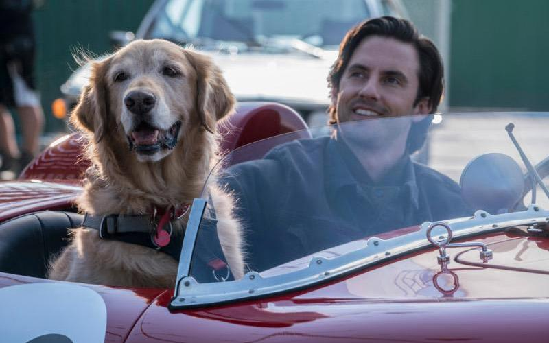 "A dog named ""Enzo"" and Milo Ventimiglia appear in the movie ""The Art of Racing in the Rain."" (CNS photo by Fox)"