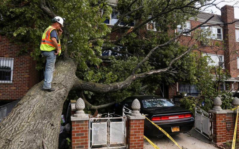 A New York City worker climbs on a tree to look at the damage it has caused to a house and car during the clean-up after Tropical Storm Isaias in Queens, N.Y., Aug. 5, 2020.