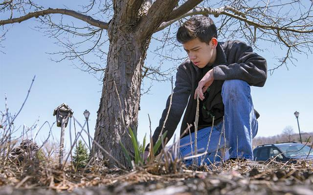 <p>Eric Barron from St. Patrick Church in Victor pulls weeds in a community member's garden April 22 as part of the church's monthly Youth Service Sunday.  (Courier photo by Jeff Witherow) </p>