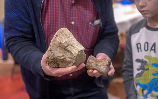 <p>Peter Dodson, a Catholic paleontologist, holds some of the dinosaur fossils that were on display prior to his March 30 presentation at Auburn';s Hilton Garden Inn. (Courier photo by John Haeger) </p>