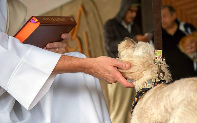 <p>Patty Hoag&rsquo;s dog Maggie is blessed by Deacon Ed Knauf during a pet blessing service Oct. 6, 2018, at St. John the Evangelist Church in Greece. (File photo)  </p>