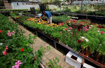 A Palestinian worker looks after flowers at a nursery in Ramallah, West Bank, April 13, 2020.