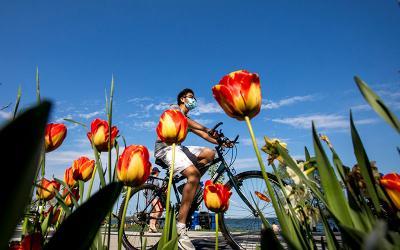 A cyclist in Toronto rides along a waterfront trail near Humber Bay Shores May 24, 2020, during the coronavirus pandemic.
